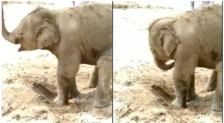 This adorable video of baby elephant taking a mud bath will make you go awww