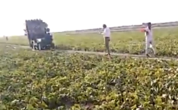 People fight locust invasion with loudspeakers set in the middle of farm. Viral video