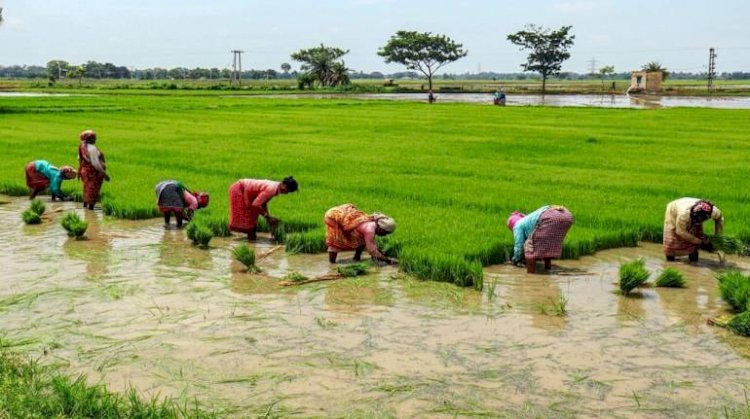 Ample monsoon rains push India's summer crop plantings to record