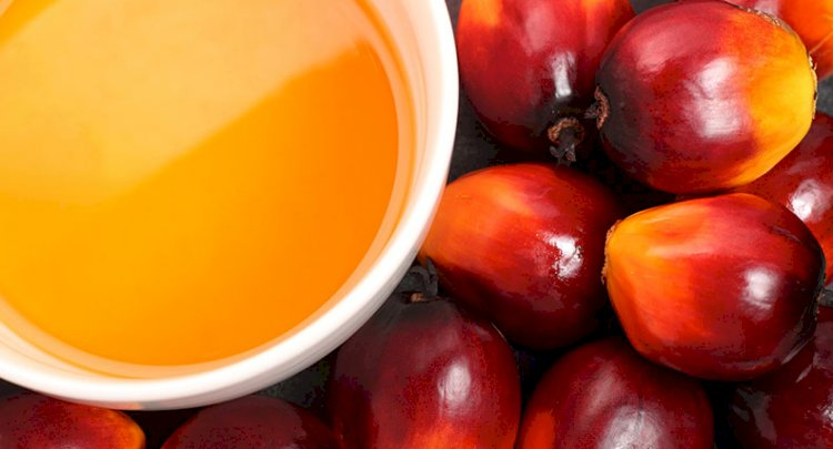 Govt cuts Customs duty by 10% on crude palm oil