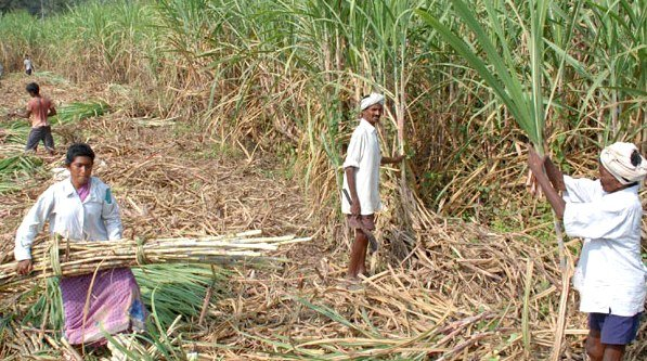Govt to add Rs 3,500 crore subsidy directly to bank accounts of sugarcane farmers